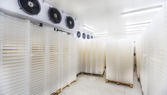 Ahern - Cold Storage